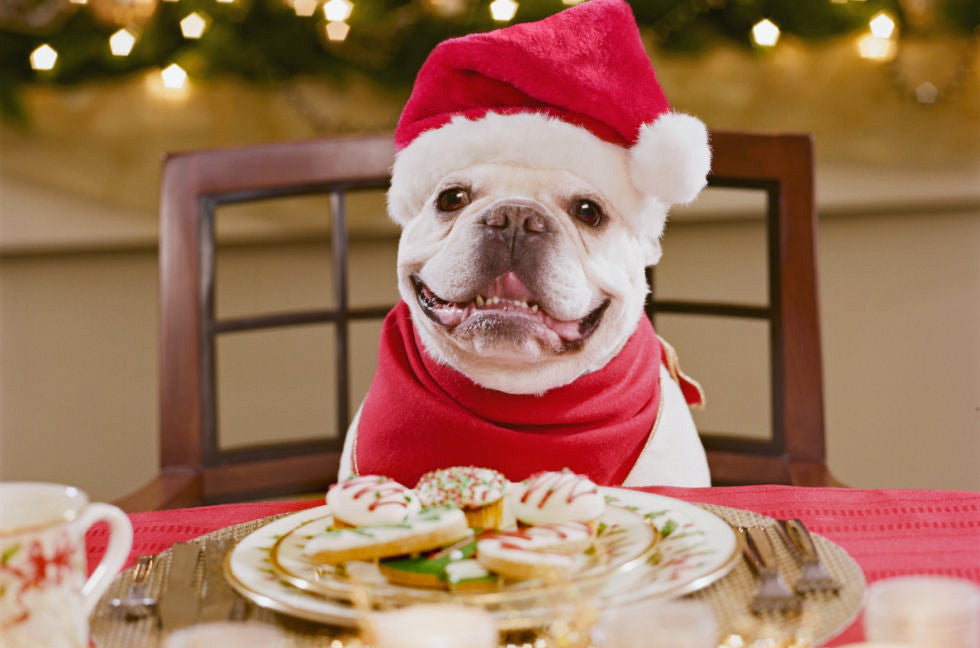 What NOT To Feed Your Dog This Christmas