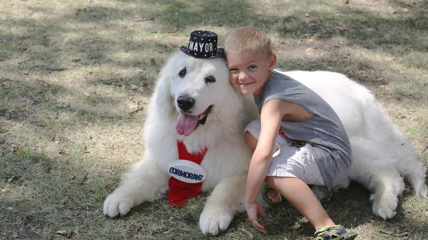 WHO'S A GOOD BOY? The Great Pyrenees Mayor, That's Who