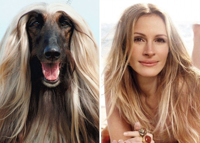13 Dogs & their Celebrity Doppelgangers
