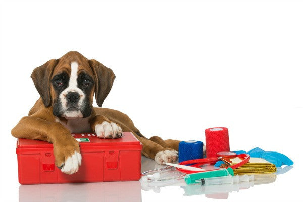 SKIP A BEAT: Canine First Aid Is Here