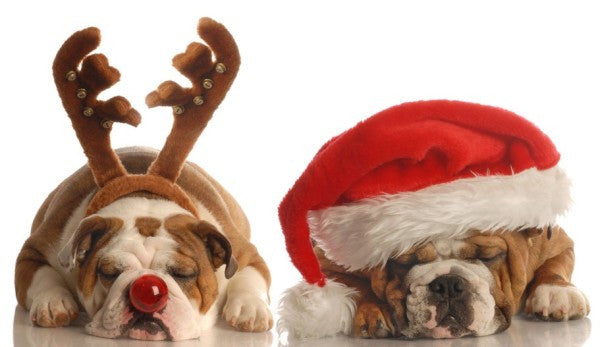 SANTA PAWS: the 17 Best Dog Christmas Outfits on the Internet