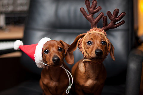 Santa Paws The 17 Best Dog Christmas Outfits On The Internet