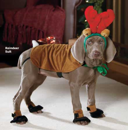 SANTA PAWS: the 17 Best Dog Christmas Outfits on the Internet ...