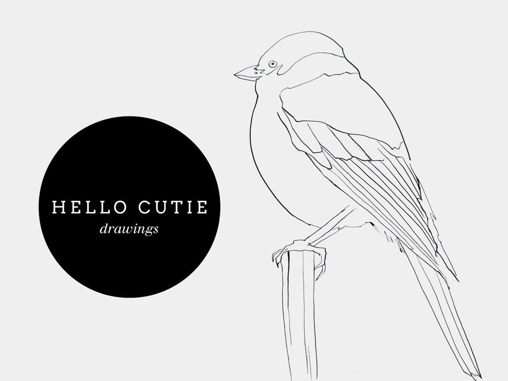 Currently working on: cute bird drawings