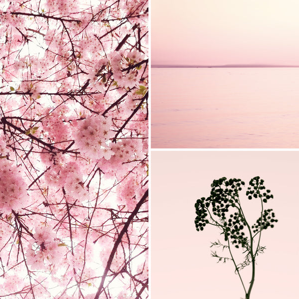 color inspiration | pink and black | eve sand