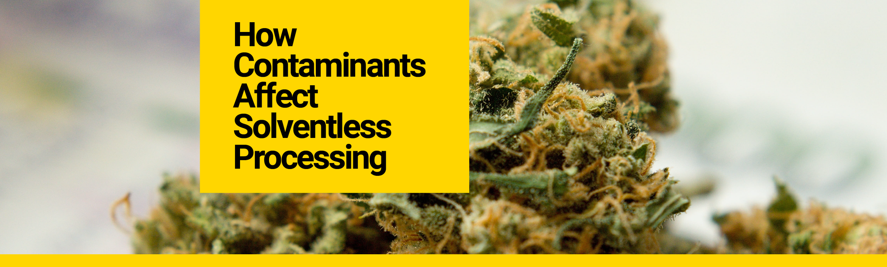 How Contaminants Affect Solventless Processing
