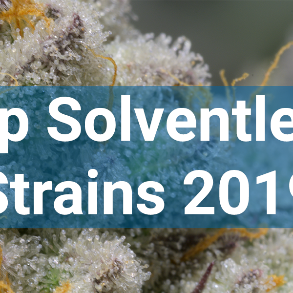 Top Rosin Strains 2019 PurePressure Rosin Press Strains
