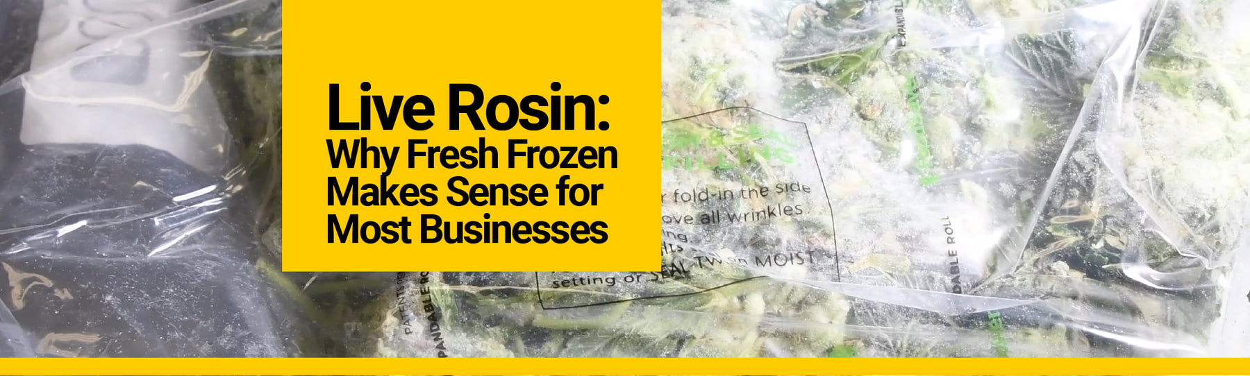Live Rosin: Why Fresh Frozen Makes Sense for Most Businesses