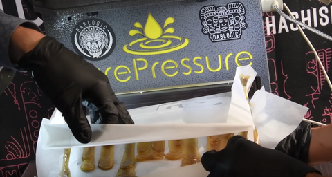 Cannabis Extraction Processing Solventless Commercial Scale Rosin