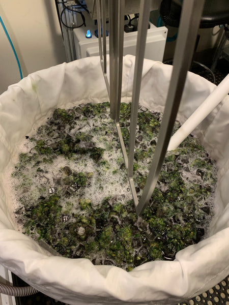 Bubble Hash Washing with the Axis trichome separator at Kush Masters