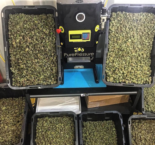 Rosin Press Canada Top Quality Technology PurePressure