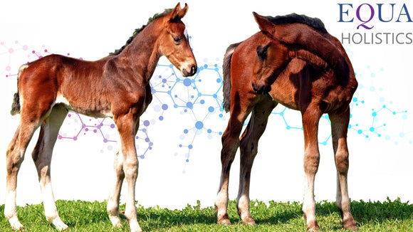 Mares and foals: Why probiotics are important during times of stress