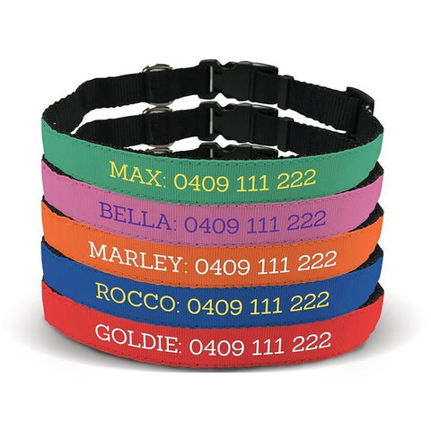 Design Your Own Pet Collar - Medium