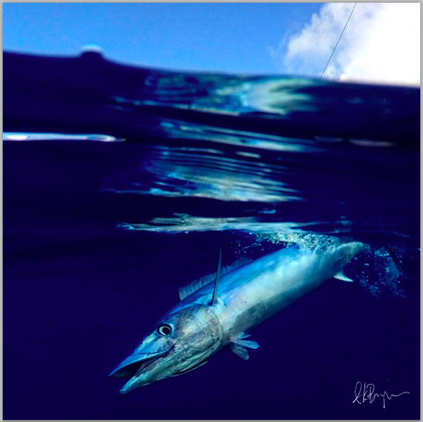 Pelagic Series Instagram Collection