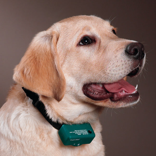 Ecollars: Electronic Dog Bark Collars