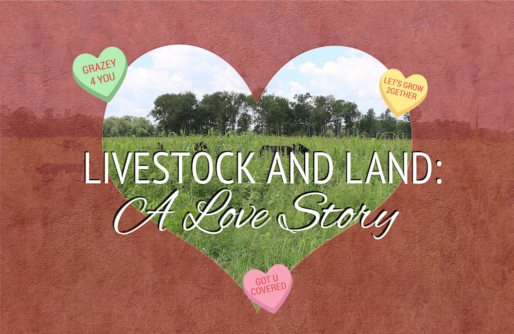 Livestock and Land: A Love Story