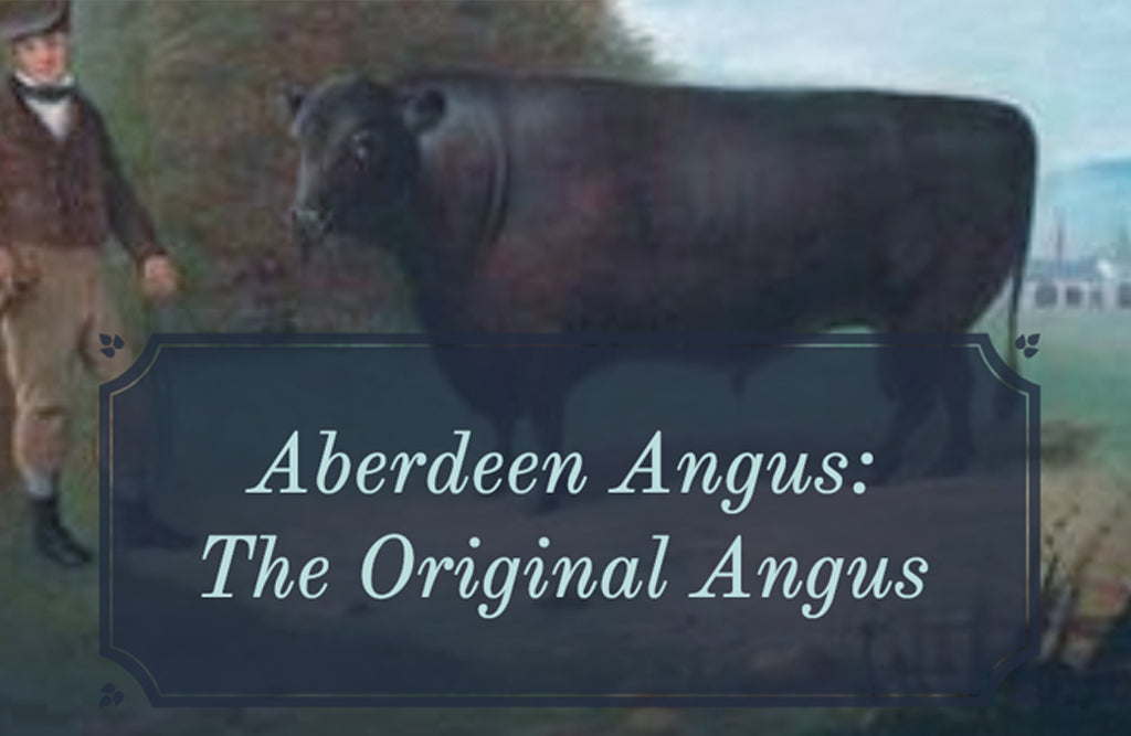 Our Beef is Aberdeen Angus – So What?