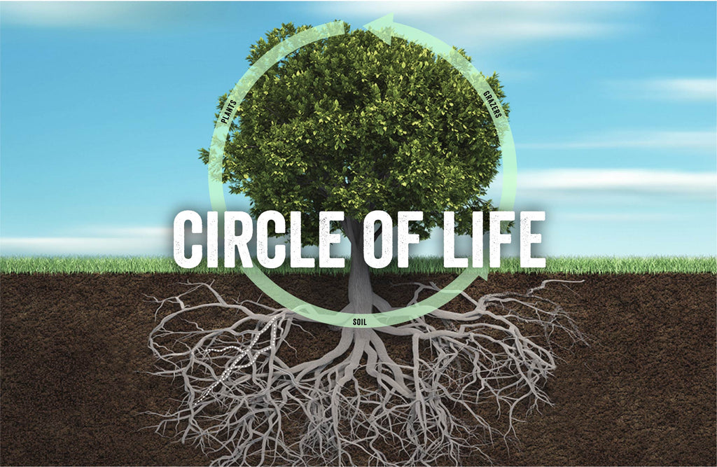 The Circle of Life: How the Carbon Cycle Powers our Ecosystem