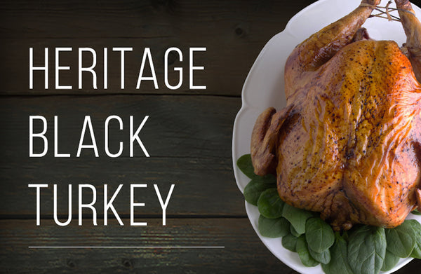 Frequently Asked Questions about our Heritage Black Turkey: Learn why it's so special and how to prepare it!