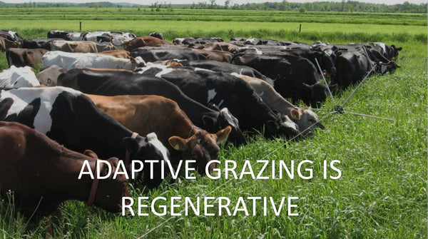 Adaptive Grazing is Regenerative
