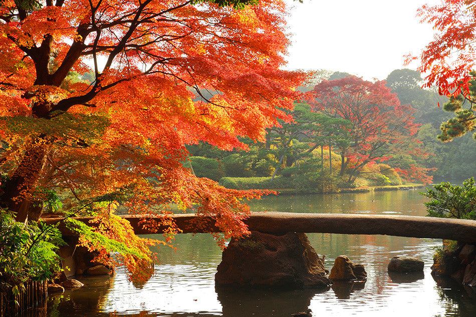 3 Best Japanese Traditional Gardens in Tokyo
