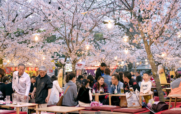 Hanami Cherry Blossom Viewing