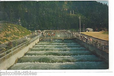 Bonneville Dam,Fish Ladder-Oregon 1968 - Cakcollectibles