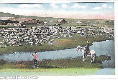 Early Post Card-On A Sheep Ranch in Lambing Time - Cakcollectibles