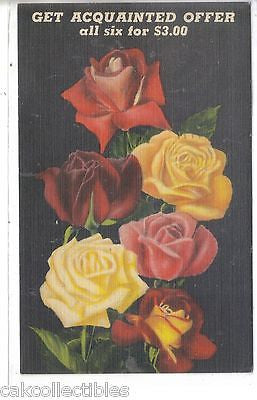 Advertising Post Card-Roses from Empire Nurseries-Tyler,Texas 1949 - Cakcollectibles