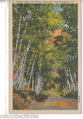 Driving along The Birches,Ames Hill-West Brattleboro,Vermont - Cakcollectibles