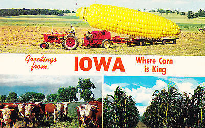 Greetings From Iowa Postcard - Cakcollectibles