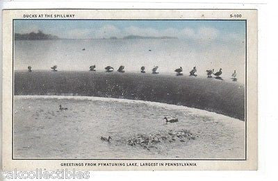 Ducks at The Spillway-Greetings from Lake Pymatuning Lake-Pennsylvania - Cakcollectibles