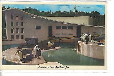 Penguins at The Portland Zoo-Portland,Oregon 1964 - Cakcollectibles