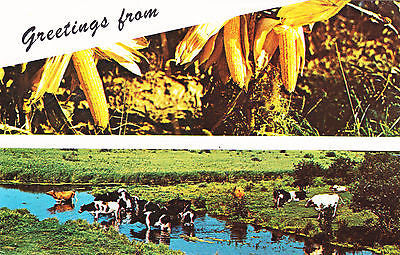 Greetings From Illinois Postcard - Cakcollectibles