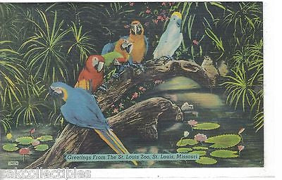 Greetings from The St. Louis Zoo-St. Louis,Missouri (Parrots) - Cakcollectibles