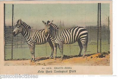 Grants Zebra-New York Zoological Park - Cakcollectibles