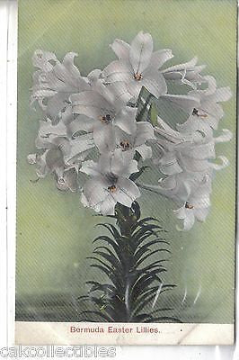 Bermuda Easter Lilies UDB - Cakcollectibles