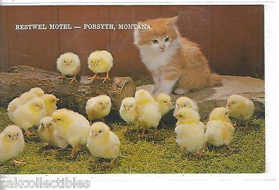Restwell Motel-Forsyth,Montana (Kitten and Chicks) - Cakcollectibles