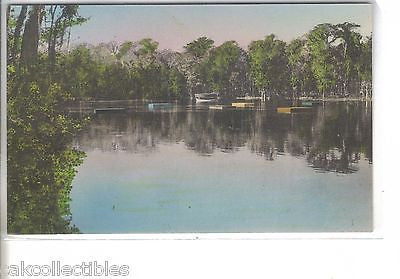 Glass Bottom Boat and Bathing Floats-Wakulla Springs,Florida (Hand Colored) - Cakcollectibles
