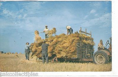 Greetings from Brockport,New York (Farming Scene) - Cakcollectibles