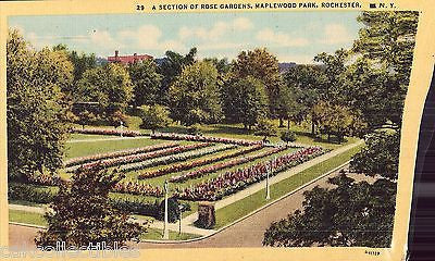 A Section of Rose Gardens,Maplewood Park-Rochester,New York - Cakcollectibles