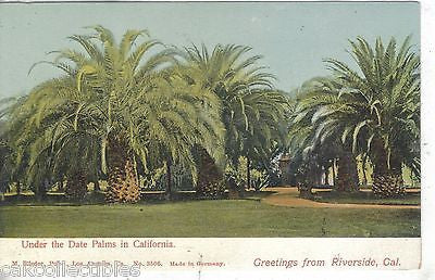Under The Date Palms in California-Greetings from Riverside,California UDB - Cakcollectibles