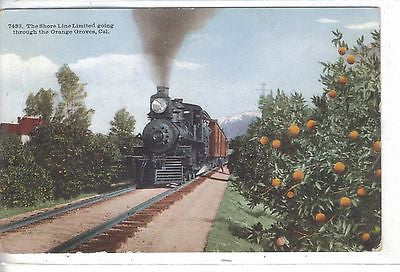 The Shoreline Limited Going Through The Orange Groves-California 1912 - Cakcollectibles