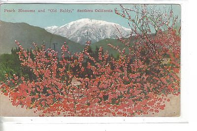"Peach Blossoms and ""Old Baldy""-Southern California - Cakcollectibles"