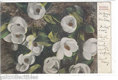 Early Post Card-Magnolia Blooms-1907 - Cakcollectibles