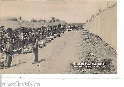 Tobacco Plantation in The Connecticut Valley - Cakcollectibles - 1