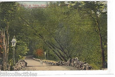 Causeway at Yaddo,Spencer Trask's Residence-Saratoga Springs,New York  1911 - Cakcollectibles