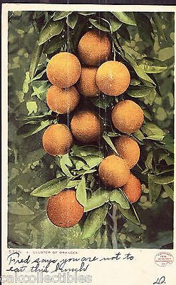 A Cluster of Oranges 1907 - Cakcollectibles