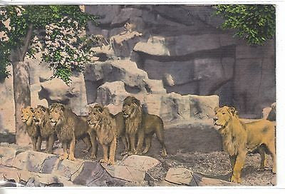 Lion Den,Detroit Zoo-Detroit,Michigan - Cakcollectibles