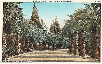 A Palm Drive in Southern California - Cakcollectibles